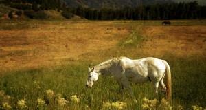 Το άλογο του Μοπασάν