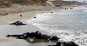 Οι πρόσφυγες ΔΕΝ είναι «κατσαρίδες», λέει ο επίσκοπος του Μάντσεστερ