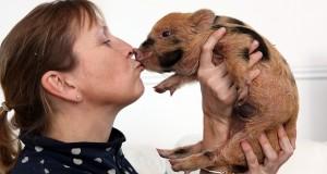 Μικρογούρουνα για όρθια γουρούνια